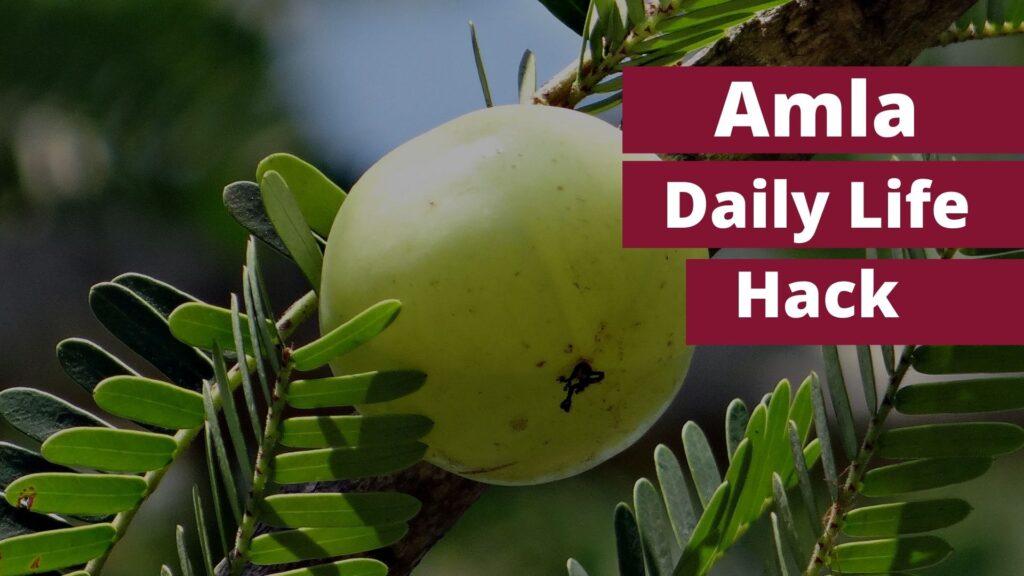 Amla, Health Benefits Hack, Amazing Life Hack